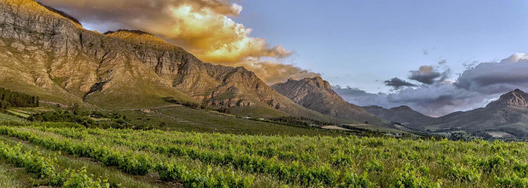 Winelands3